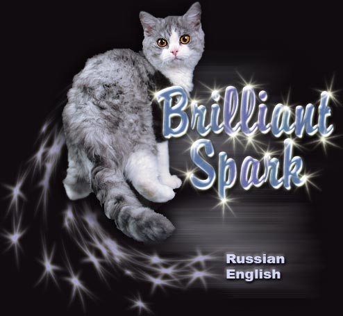 Brilliant Spark cattery